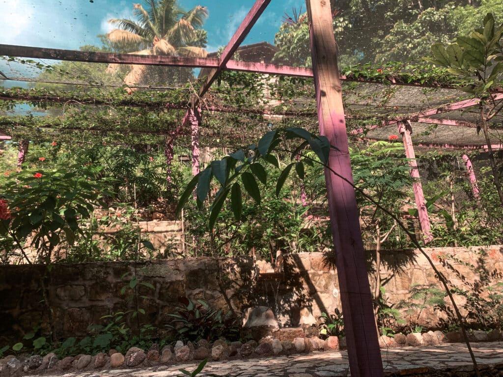 Butterfly Garden Copan